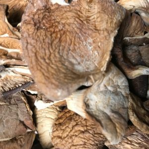 Oyster Mushrooms, Pleurotus Ostreatus - Bulk by the ounce