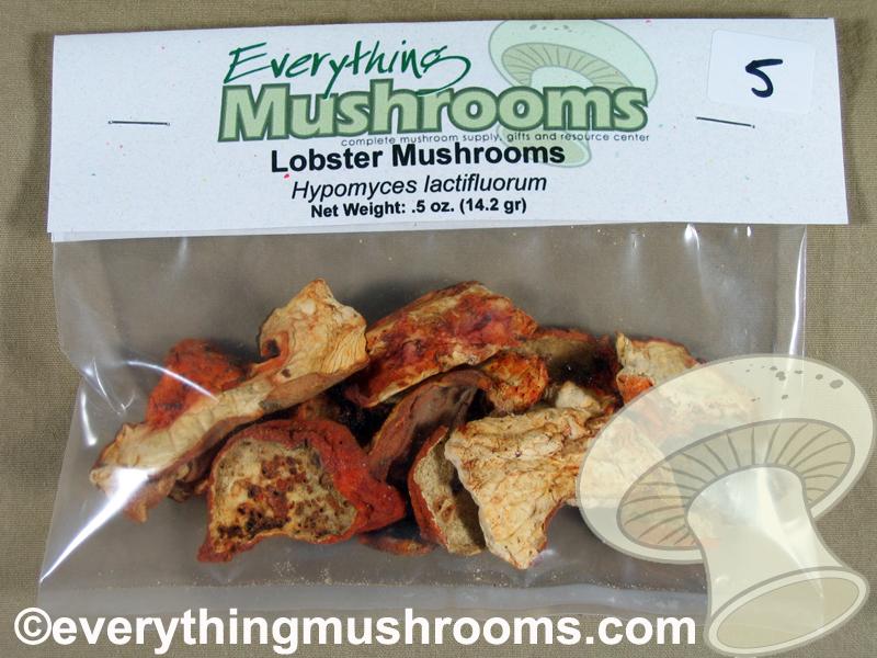Lobster Mushrooms, Hypomyces lactifluorum - .5oz pack