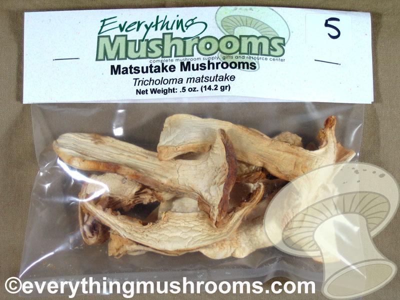 Matsutake Mushrooms, Tricholoma magnivelare - .5oz pack