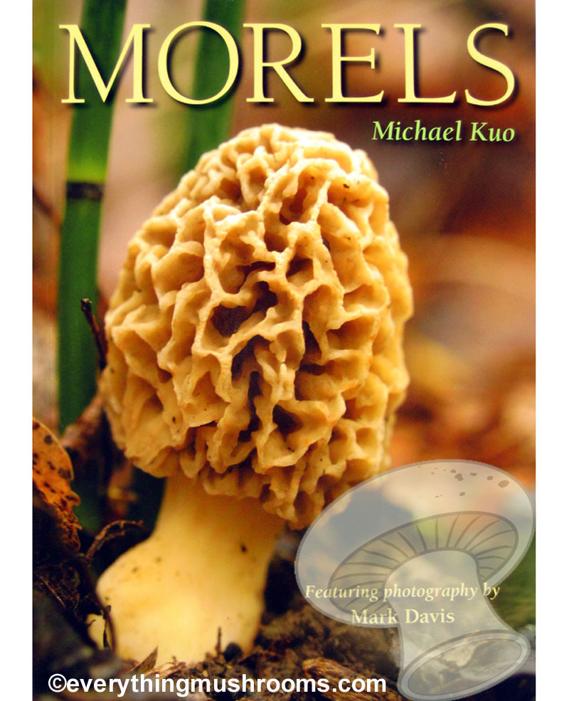 Morels by Michael Kuo (featuring photography by Mark Davis)